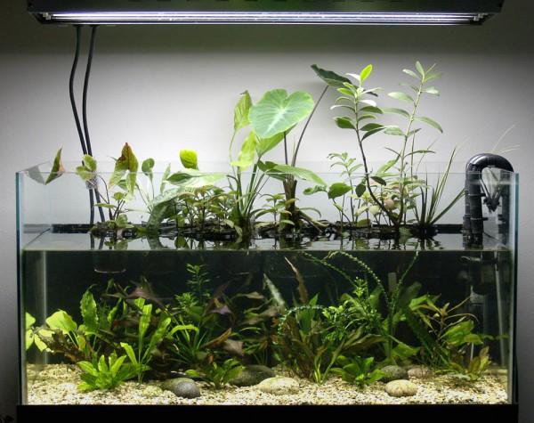 Planta de interior para reducir nitratos for Plantas para estanque exterior